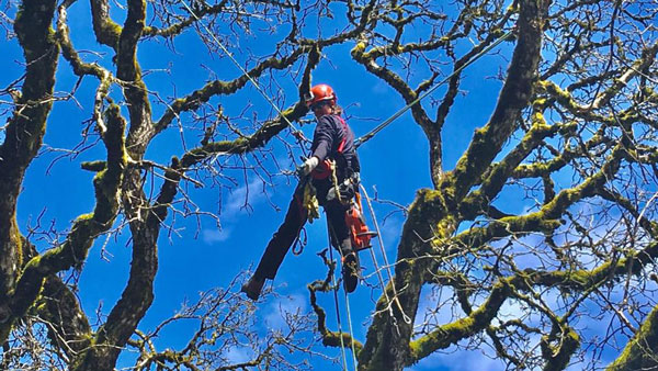 Tree Care Cascadia at Work in the Air